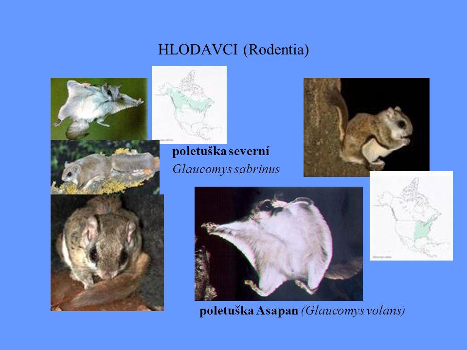 Nearktická zoogeografická oblast OBOJŽIVELNÍCI: 3 endemické čeledi: Dicamptodontidae- mlokanovití, (4 dr.), Amphiumidae- úhoříkovití, Rhyacotritonidae- mlokánkovití, a 3 subendemické č.: Ambystomatidae - axolotlovití (30 dr.), Proteidae- macarátovití, např.