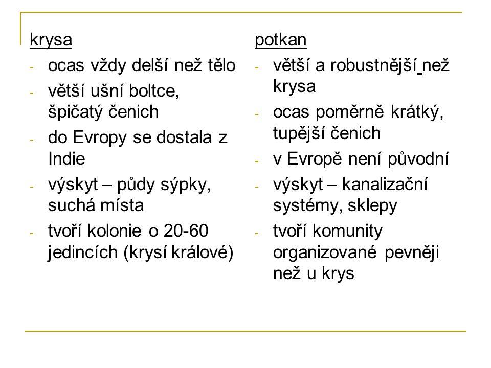 krysa - ocas vždy delší než tělo - větší ušní boltce, špičatý čenich - do Evropy se dostala z Indie - výskyt – půdy sýpky, suchá místa - tvoří kolonie o 20-60 jedincích (krysí králové) potkan - větší a robustnější než krysa - ocas poměrně krátký, tupější čenich - v Evropě není původní - výskyt – kanalizační systémy, sklepy - tvoří komunity organizované pevněji než u krys