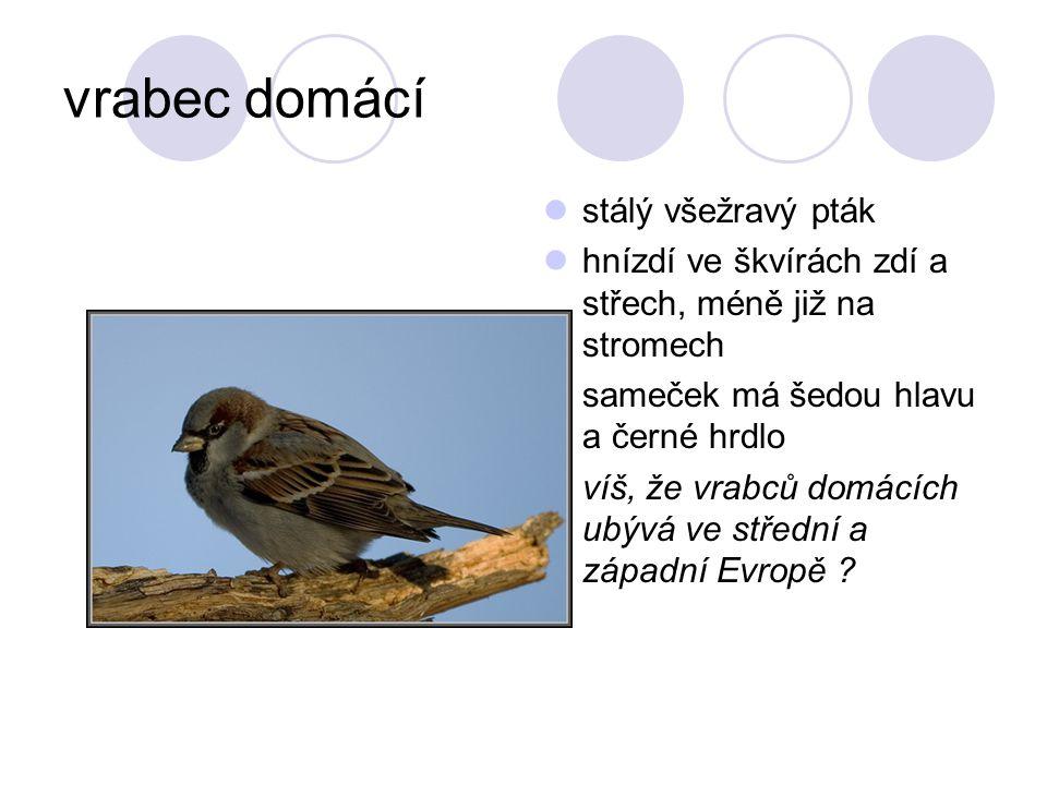 vrabec domácí stálý všežravý pták hnízdí ve škvírách zdí a střech, méně již na stromech sameček má šedou hlavu a černé hrdlo víš, že vrabců domácích ubývá ve střední a západní Evropě ?