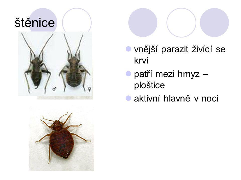 štěnice vnější parazit živící se krví patří mezi hmyz – ploštice aktivní hlavně v noci
