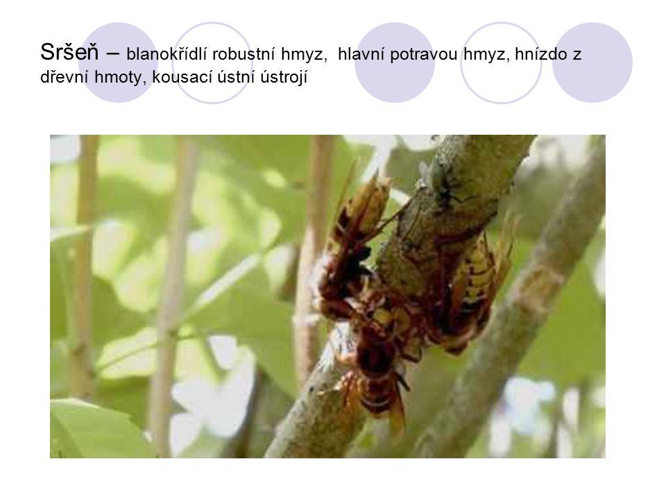 Sršeň – blanokřídlí robustní hmyz, hlavní potravou hmyz, hnízdo z dřevní hmoty, kousací ústní ústrojí