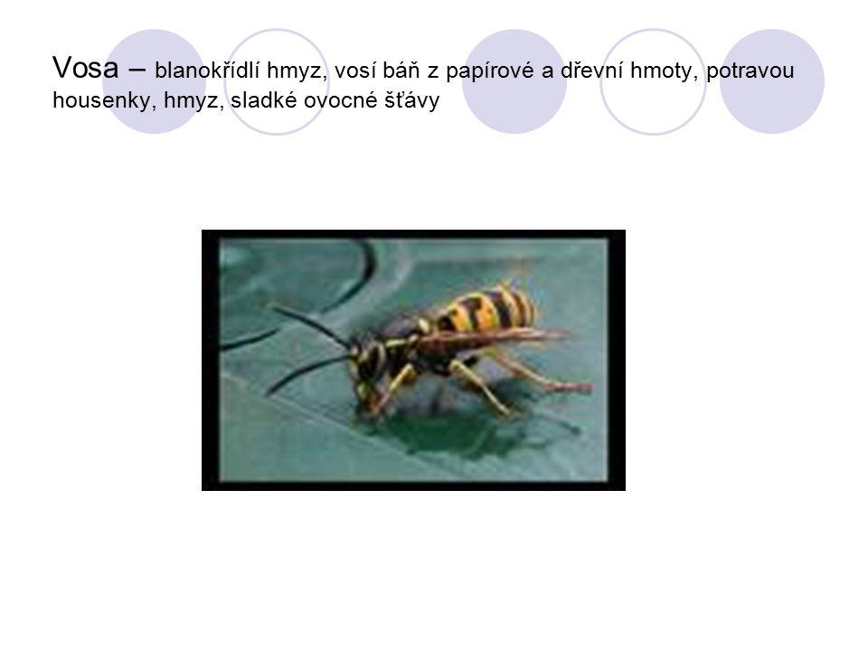 Vosa – blanokřídlí hmyz, vosí báň z papírové a dřevní hmoty, potravou housenky, hmyz, sladké ovocné šťávy