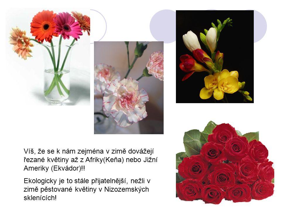 Víš, že se k nám zejména v zimě dovážejí řezané květiny až z Afriky(Keňa) nebo Jižní Ameriky (Ekvádor)!! Ekologicky je to stále přijatelnější, nežli v