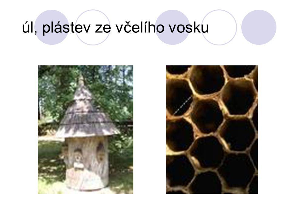 úl, plástev ze včelího vosku