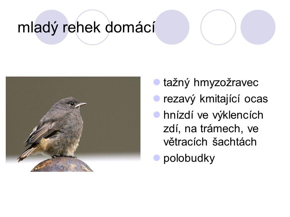 sýček obecný malá, velmi ohrožená, chráněná sova hnízdí v zemědělských usedlostech a v dutinách stromů potravou hlodavci a hmyz