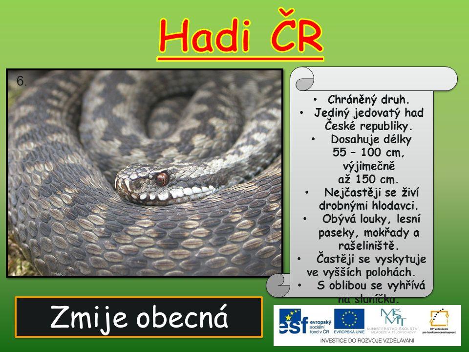 Zmije obecná Chráněný druh. Jediný jedovatý had České republiky. Dosahuje délky 55 – 100 cm, výjimečně až 150 cm. Nejčastěji se živí drobnými hlodavci