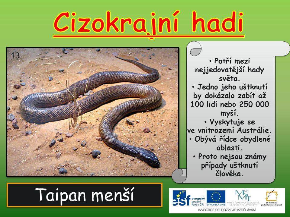Taipan menší Patří mezi nejjedovatější hady světa. Jedno jeho uštknutí by dokázalo zabít až 100 lidí nebo 250 000 myší. Vyskytuje se ve vnitrozemí Aus