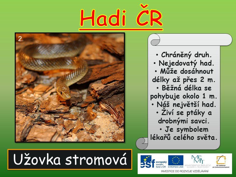 Užovka obojková Chráněný druh.Nejedovatý had. Živí obojživelníky a rybami.