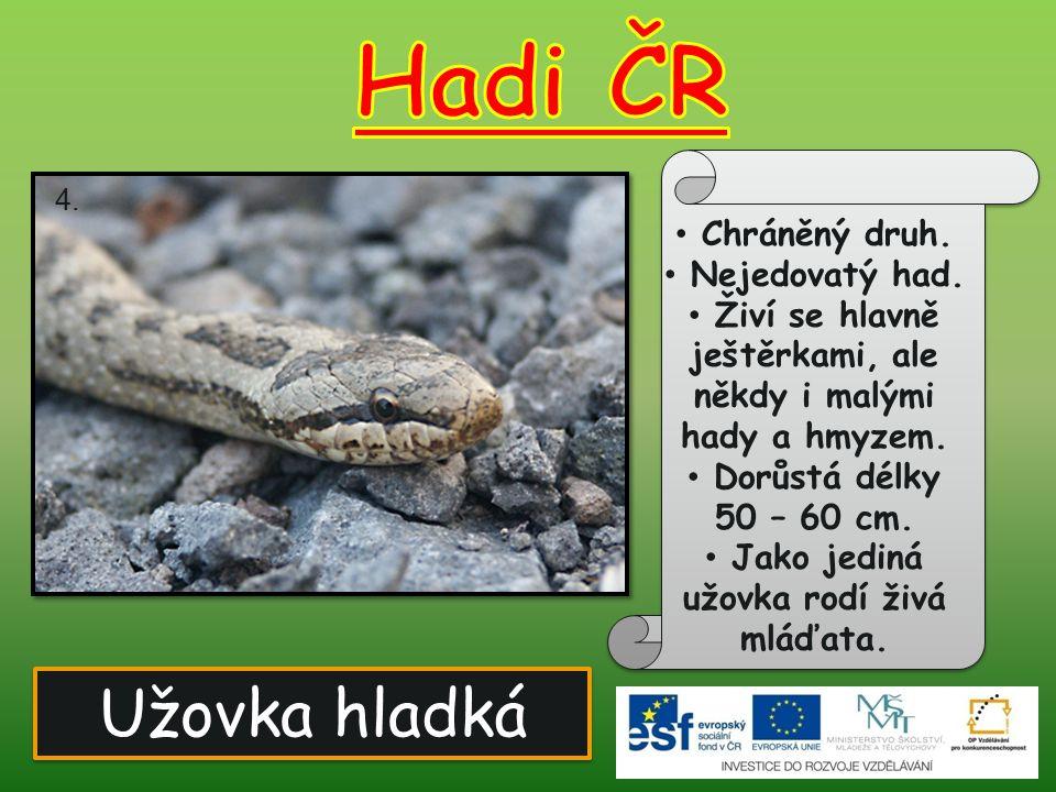 Užovka hladká Chráněný druh. Nejedovatý had. Živí se hlavně ještěrkami, ale někdy i malými hady a hmyzem. Dorůstá délky 50 – 60 cm. Jako jediná užovka