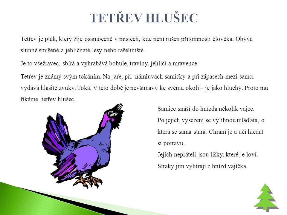 Tetřev je pták, který žije osamoceně v místech, kde není rušen přítomností člověka. Obývá slunné smíšené a jehličnaté lesy nebo rašeliniště. Je to vše