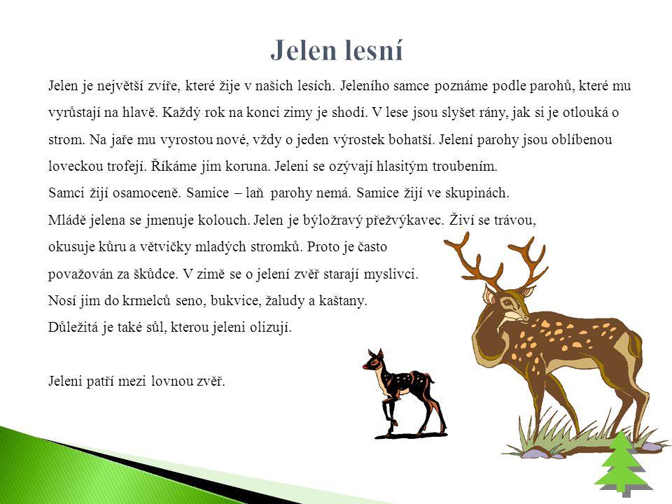 Jelen je největší zvíře, které žije v našich lesích. Jeleního samce poznáme podle parohů, které mu vyrůstají na hlavě. Každý rok na konci zimy je shod