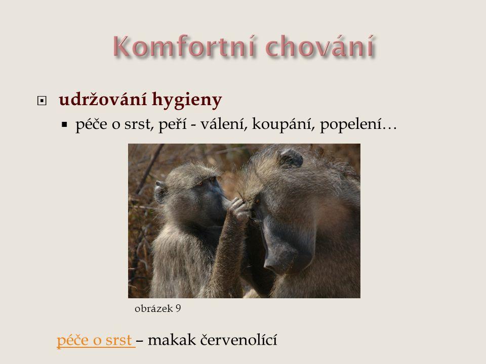  udržování hygieny  péče o srst, peří - válení, koupání, popelení… obrázek 9 péče o srst péče o srst – makak červenolící