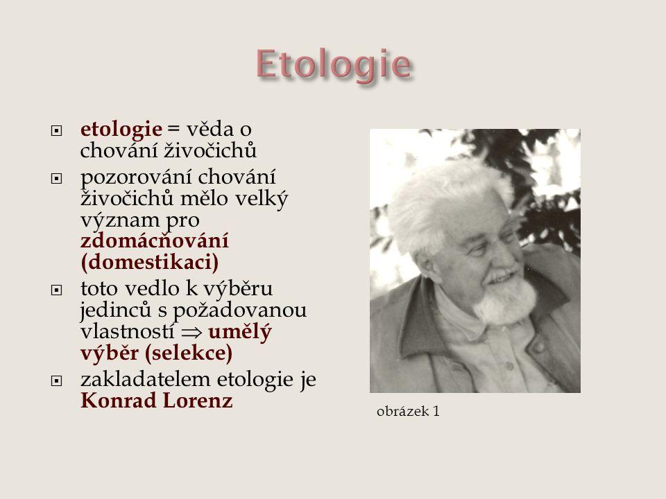  etologie = věda o chování živočichů  pozorování chování živočichů mělo velký význam pro zdomácňování (domestikaci)  toto vedlo k výběru jedinců s požadovanou vlastností  umělý výběr (selekce)  zakladatelem etologie je Konrad Lorenz obrázek 1