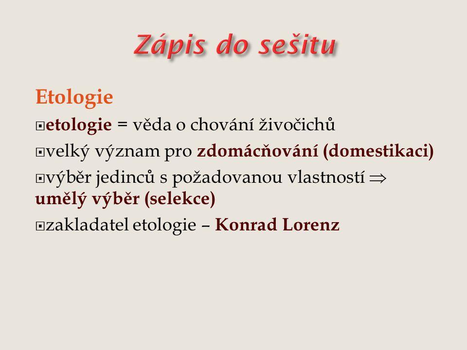 Etologie  etologie = věda o chování živočichů  velký význam pro zdomácňování (domestikaci)  výběr jedinců s požadovanou vlastností  umělý výběr (selekce)  zakladatel etologie – Konrad Lorenz