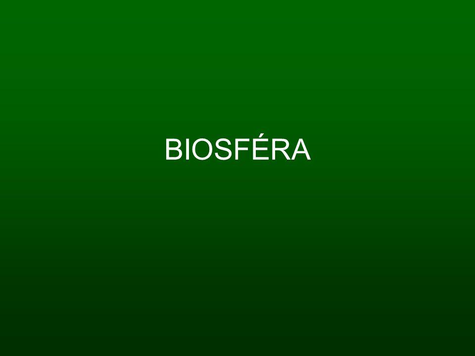 Charakteristika: Akumuluje a přetváří sluneční energii v živé hmotě 97% živé hmoty tvoří kyslík, uhlík a vodík Převládají rostlinné organismy Neustále v ní probíhají biochemické procesy - produkce = tvorba org.
