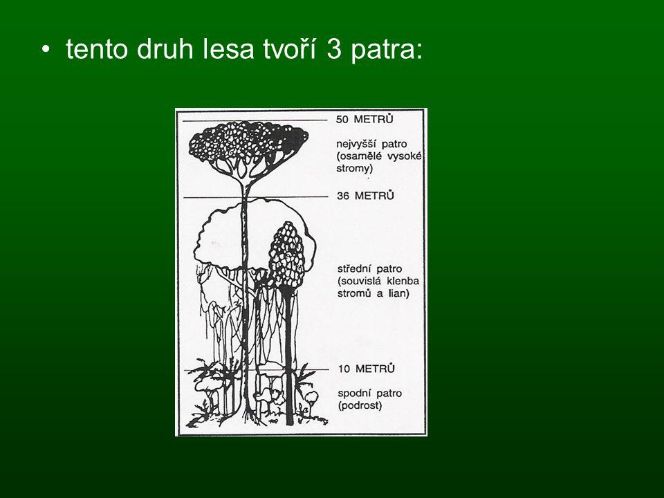 tento druh lesa tvoří 3 patra:
