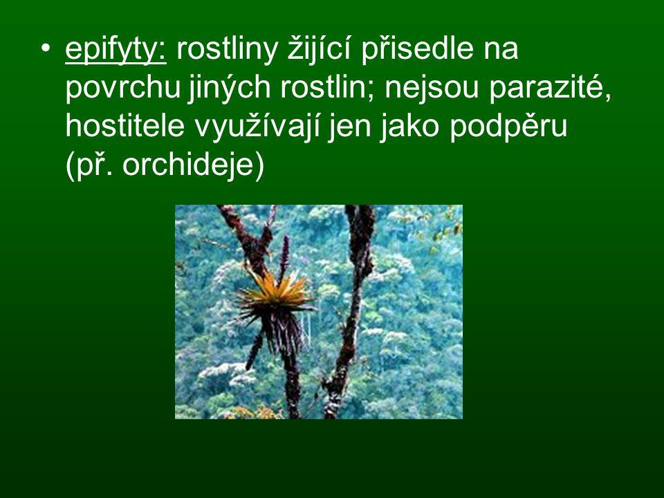 epifyty: rostliny žijící přisedle na povrchu jiných rostlin; nejsou parazité, hostitele využívají jen jako podpěru (př. orchideje)