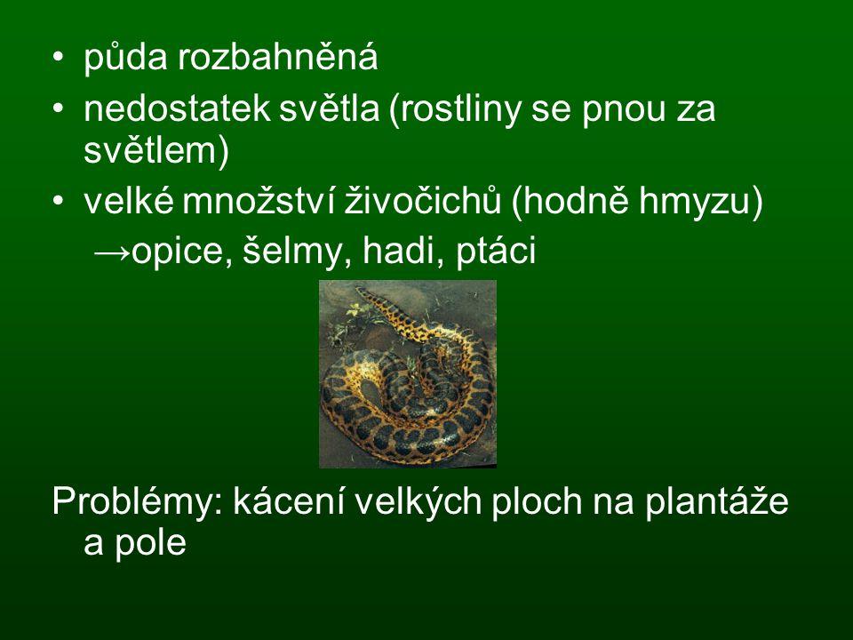 půda rozbahněná nedostatek světla (rostliny se pnou za světlem) velké množství živočichů (hodně hmyzu) →opice, šelmy, hadi, ptáci Problémy: kácení vel