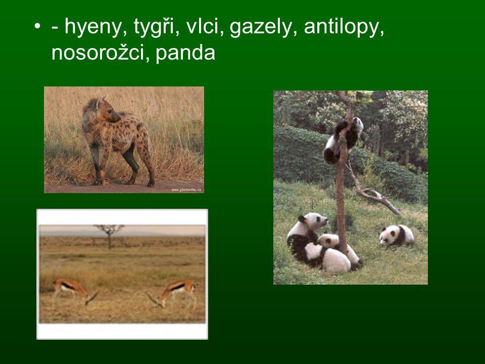 - hyeny, tygři, vlci, gazely, antilopy, nosorožci, panda