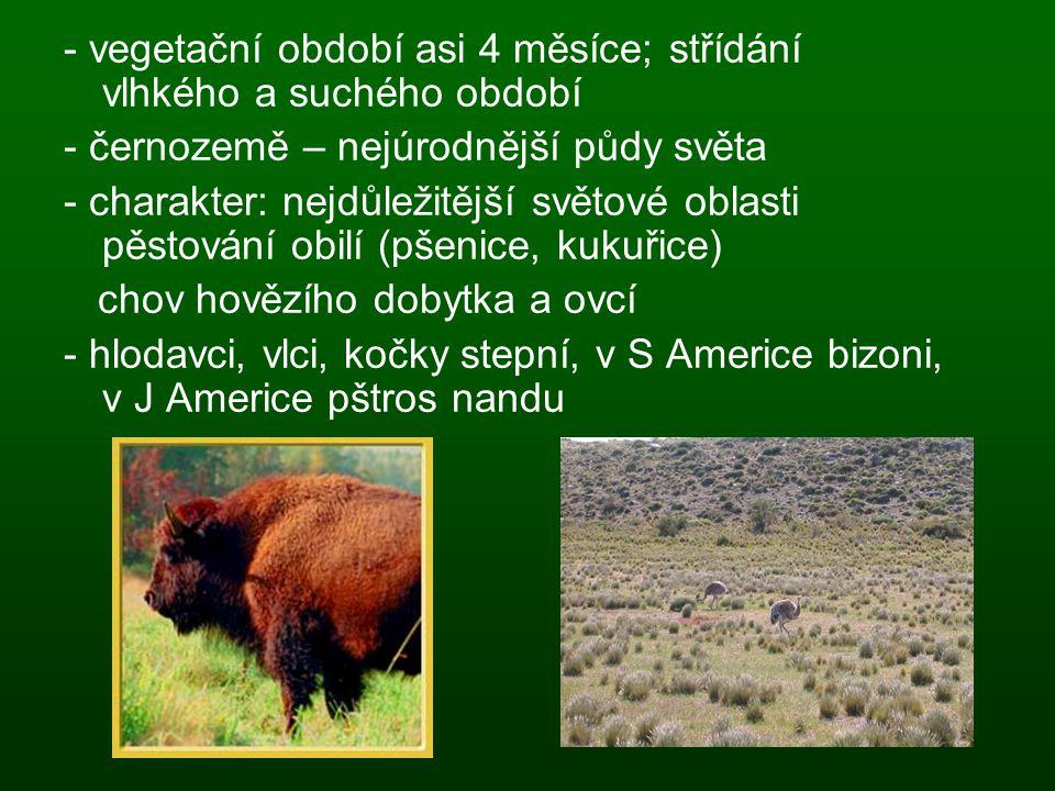 - vegetační období asi 4 měsíce; střídání vlhkého a suchého období - černozemě – nejúrodnější půdy světa - charakter: nejdůležitější světové oblasti p