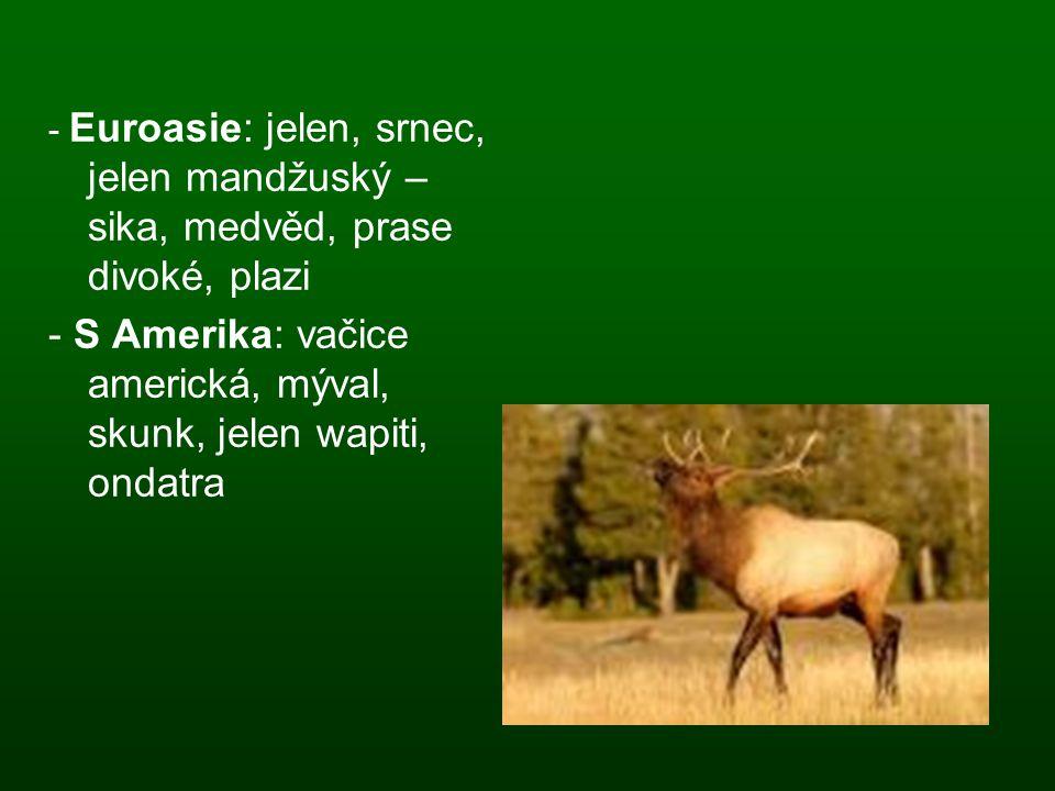 - Euroasie: jelen, srnec, jelen mandžuský – sika, medvěd, prase divoké, plazi - S Amerika: vačice americká, mýval, skunk, jelen wapiti, ondatra