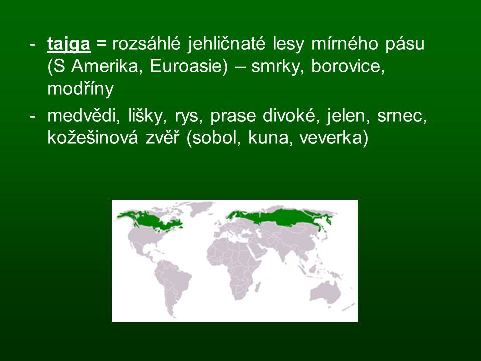 -tajga = rozsáhlé jehličnaté lesy mírného pásu (S Amerika, Euroasie) – smrky, borovice, modříny -medvědi, lišky, rys, prase divoké, jelen, srnec, kože