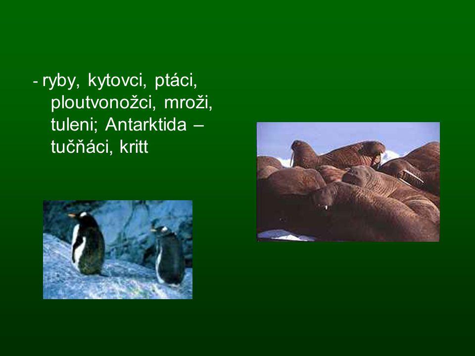 - ryby, kytovci, ptáci, ploutvonožci, mroži, tuleni; Antarktida – tučňáci, kritt