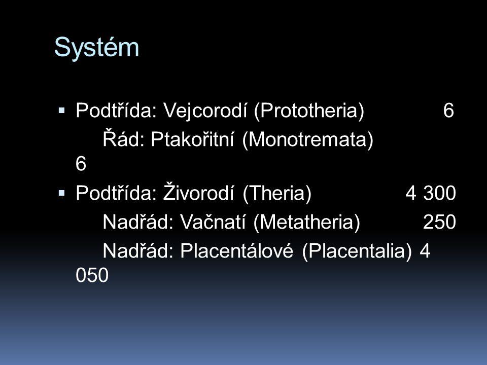 Systém  Podtřída: Vejcorodí (Prototheria)6 Řád: Ptakořitní (Monotremata) 6  Podtřída: Živorodí (Theria) 4 300 Nadřád: Vačnatí (Metatheria) 250 Nadřád: Placentálové (Placentalia) 4 050