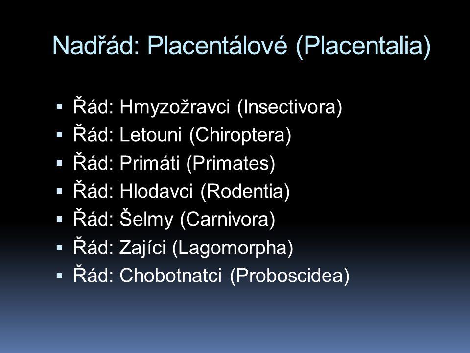 Nadřád: Placentálové (Placentalia)  Řád: Hmyzožravci (Insectivora)  Řád: Letouni (Chiroptera)  Řád: Primáti (Primates)  Řád: Hlodavci (Rodentia)  Řád: Šelmy (Carnivora)  Řád: Zajíci (Lagomorpha)  Řád: Chobotnatci (Proboscidea)