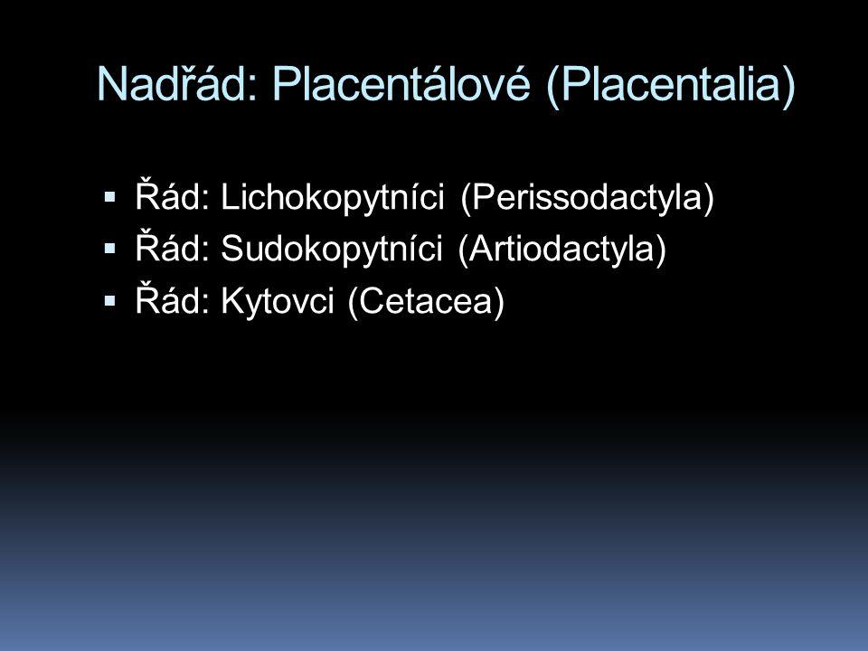 Nadřád: Placentálové (Placentalia)  Řád: Lichokopytníci (Perissodactyla)  Řád: Sudokopytníci (Artiodactyla)  Řád: Kytovci (Cetacea)