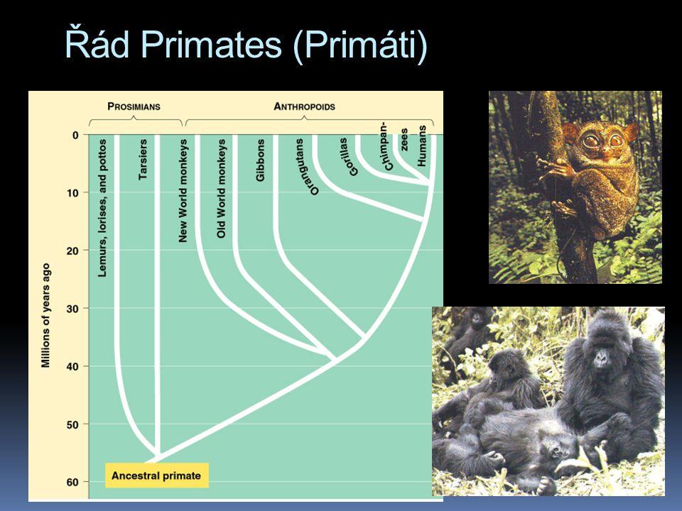 Řád Primates (Primáti)