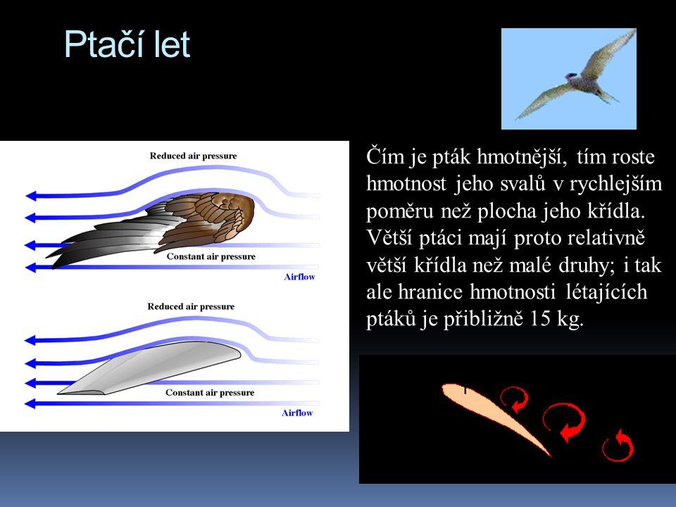 Ptačí let Čím je pták hmotnější, tím roste hmotnost jeho svalů v rychlejším poměru než plocha jeho křídla. Větší ptáci mají proto relativně větší kříd