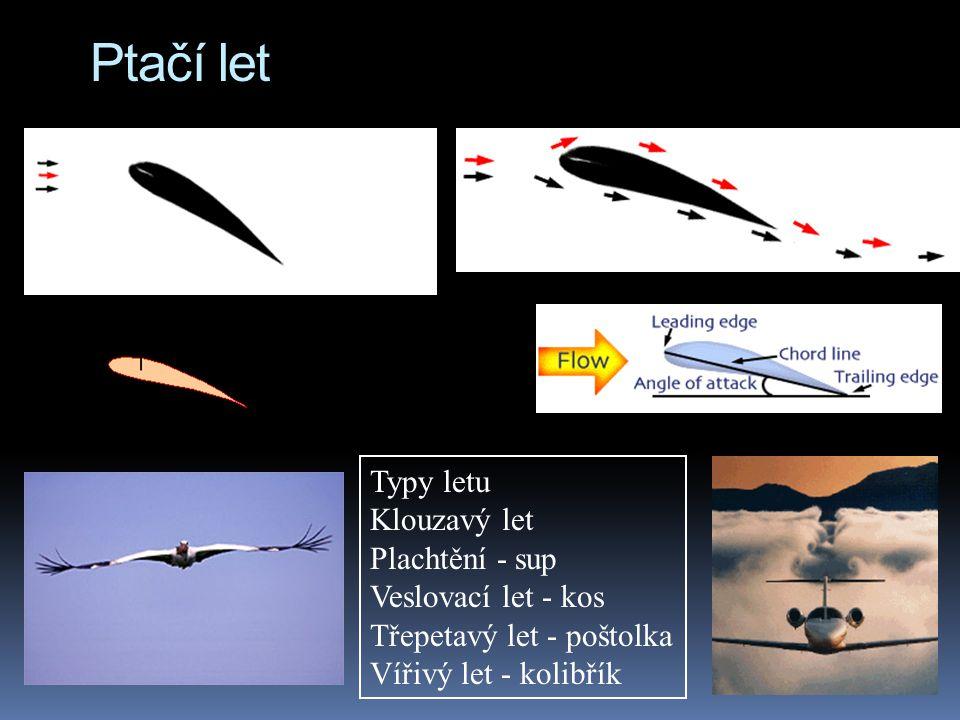 Ptačí let Typy letu Klouzavý let Plachtění - sup Veslovací let - kos Třepetavý let - poštolka Vířivý let - kolibřík