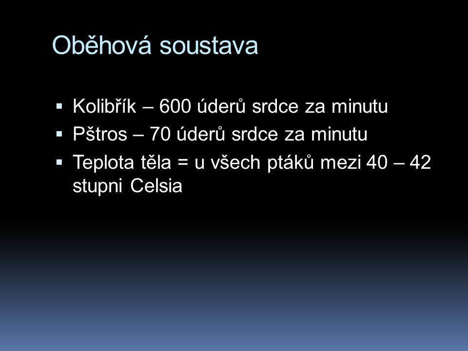 Oběhová soustava  Kolibřík – 600 úderů srdce za minutu  Pštros – 70 úderů srdce za minutu  Teplota těla = u všech ptáků mezi 40 – 42 stupni Celsia