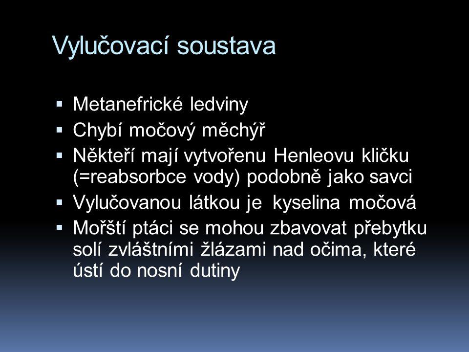 Vylučovací soustava  Metanefrické ledviny  Chybí močový měchýř  Někteří mají vytvořenu Henleovu kličku (=reabsorbce vody) podobně jako savci  Vylučovanou látkou je kyselina močová  Mořští ptáci se mohou zbavovat přebytku solí zvláštními žlázami nad očima, které ústí do nosní dutiny