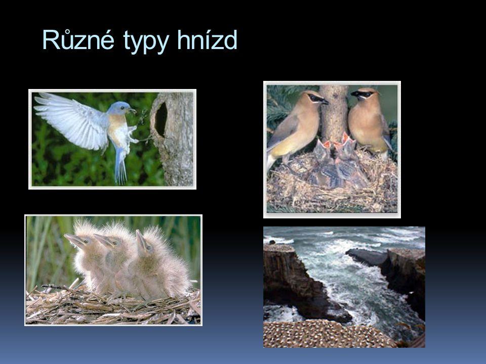 Různé typy hnízd