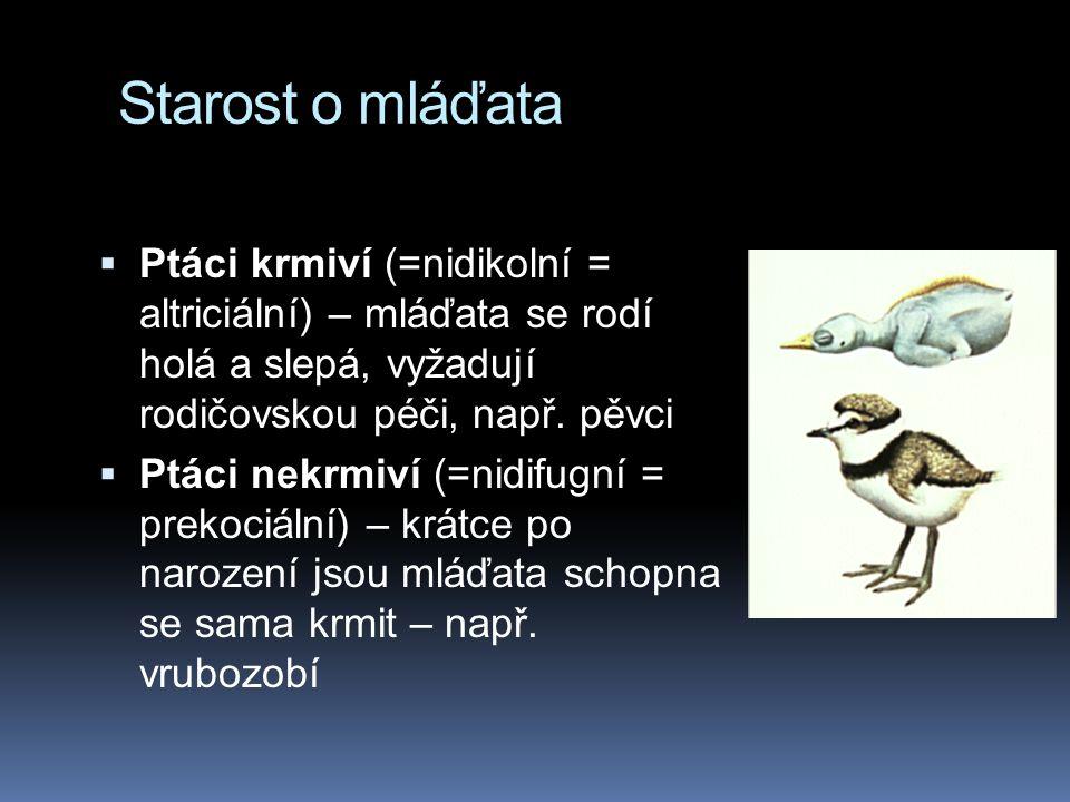 Starost o mláďata  Ptáci krmiví (=nidikolní = altriciální) – mláďata se rodí holá a slepá, vyžadují rodičovskou péči, např.