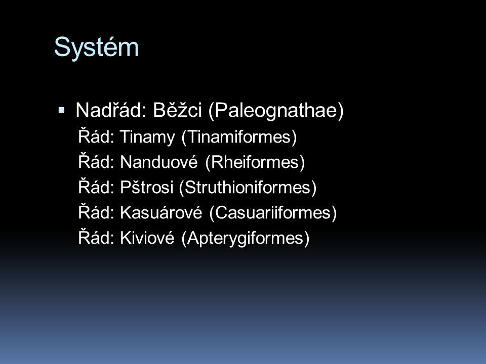 Systém  Nadřád: Běžci (Paleognathae) Řád: Tinamy (Tinamiformes) Řád: Nanduové (Rheiformes) Řád: Pštrosi (Struthioniformes) Řád: Kasuárové (Casuariifo