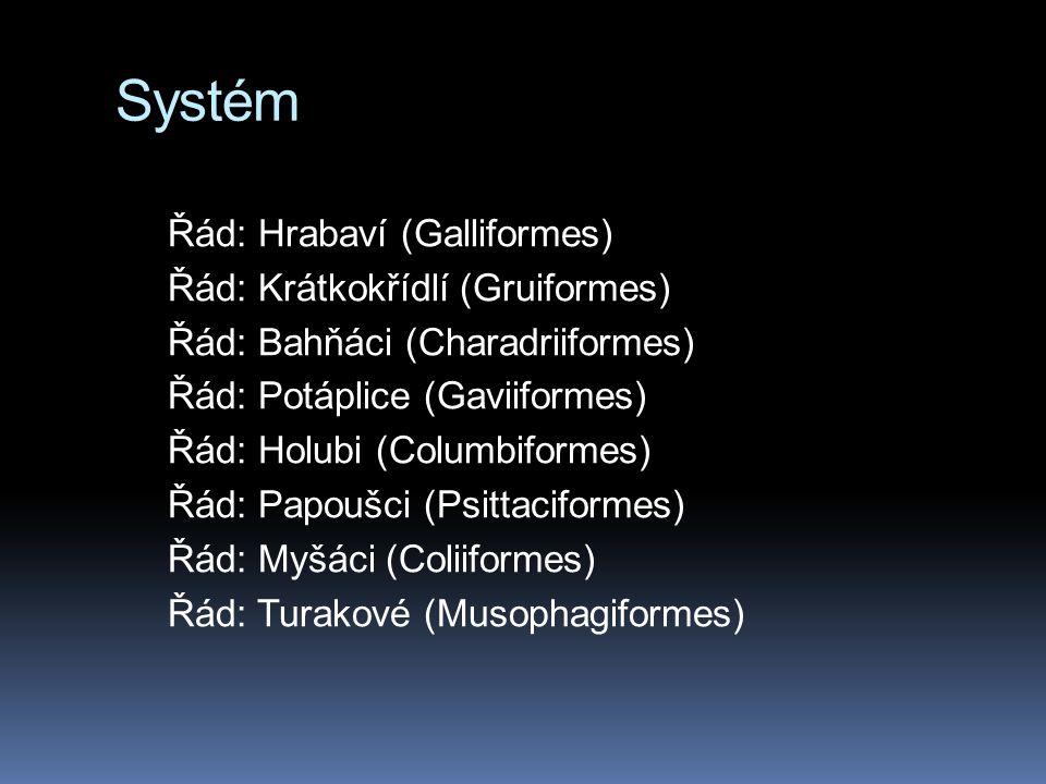 Systém Řád: Hrabaví (Galliformes) Řád: Krátkokřídlí (Gruiformes) Řád: Bahňáci (Charadriiformes) Řád: Potáplice (Gaviiformes) Řád: Holubi (Columbiformes) Řád: Papoušci (Psittaciformes) Řád: Myšáci (Coliiformes) Řád: Turakové (Musophagiformes)