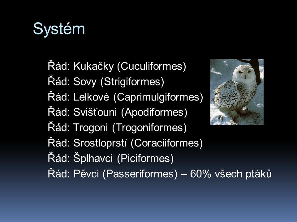 Systém Řád: Kukačky (Cuculiformes) Řád: Sovy (Strigiformes) Řád: Lelkové (Caprimulgiformes) Řád: Svišťouni (Apodiformes) Řád: Trogoni (Trogoniformes) Řád: Srostloprstí (Coraciiformes) Řád: Šplhavci (Piciformes) Řád: Pěvci (Passeriformes) – 60% všech ptáků