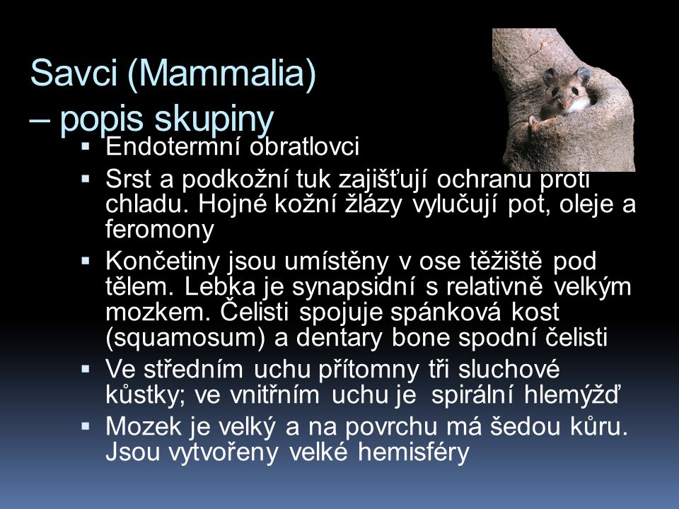 Savci (Mammalia) – popis skupiny  Endotermní obratlovci  Srst a podkožní tuk zajišťují ochranu proti chladu. Hojné kožní žlázy vylučují pot, oleje a