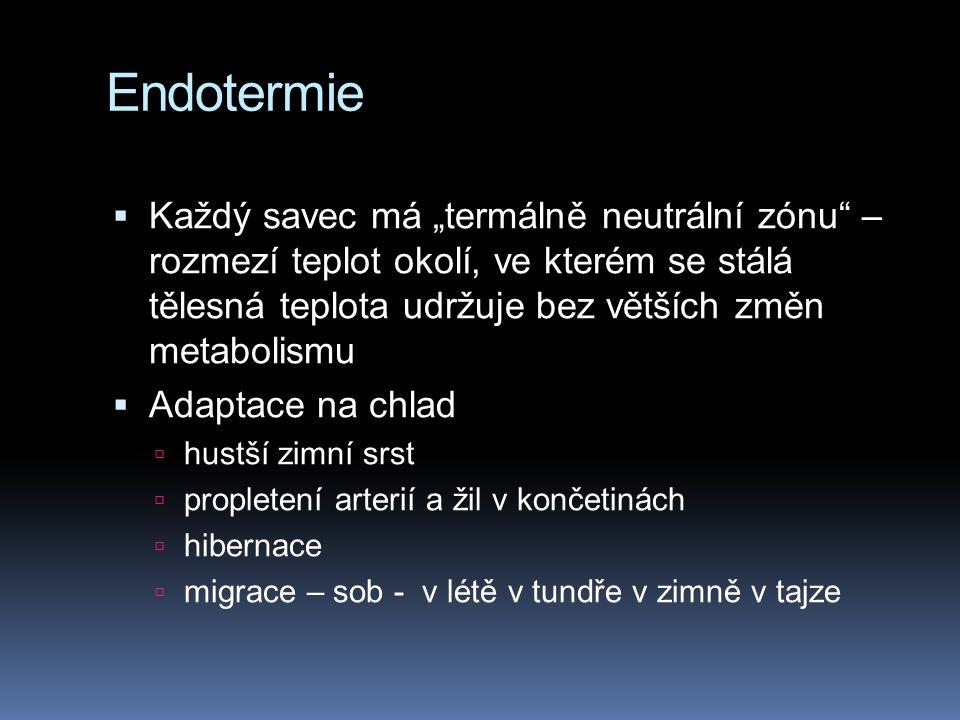 """Endotermie  Každý savec má """"termálně neutrální zónu"""" – rozmezí teplot okolí, ve kterém se stálá tělesná teplota udržuje bez větších změn metabolismu"""