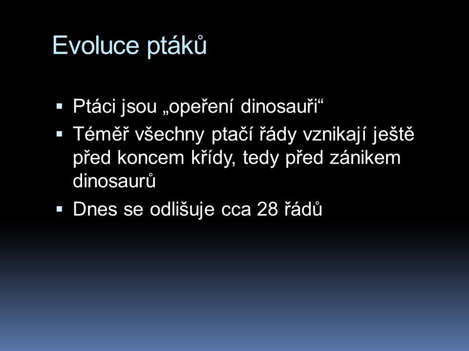 Vznik letu Peří zřejmě vzniklo původně jako izolační materiál a teprve později bylo využito k létání.