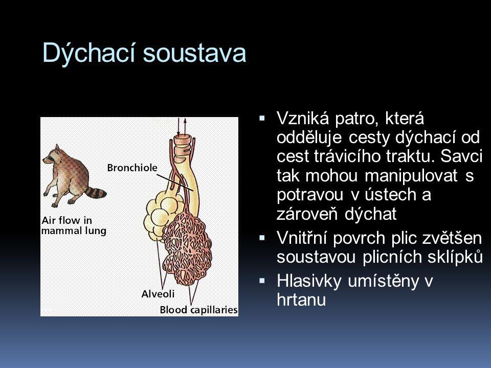 Dýchací soustava  Vzniká patro, která odděluje cesty dýchací od cest trávicího traktu. Savci tak mohou manipulovat s potravou v ústech a zároveň dých
