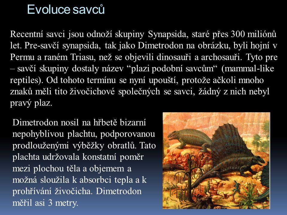Evoluce savců Recentní savci jsou odnoží skupiny Synapsida, staré přes 300 miliónů let. Pre-savčí synapsida, tak jako Dimetrodon na obrázku, byli hojn