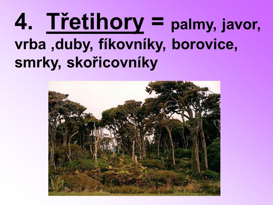 4. Třetihory = palmy, javor, vrba,duby, fíkovníky, borovice, smrky, skořicovníky