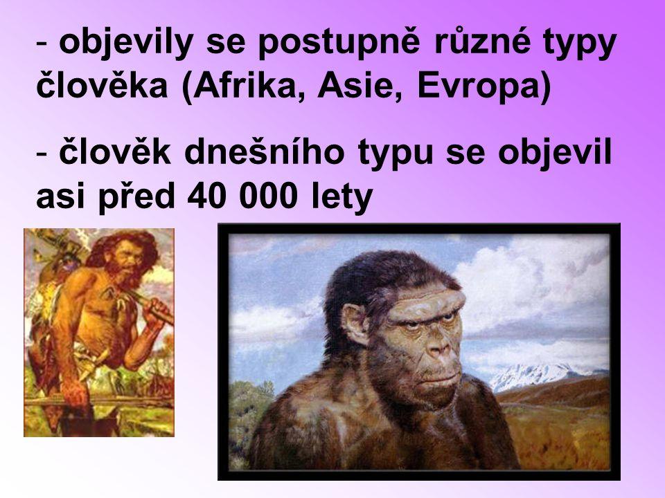 - objevily se postupně různé typy člověka (Afrika, Asie, Evropa) - člověk dnešního typu se objevil asi před 40 000 lety