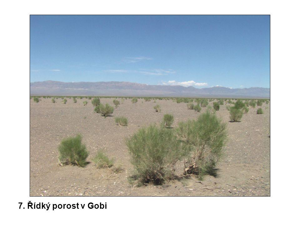 7. Řídký porost v Gobi