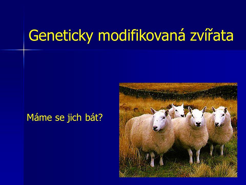 Geneticky modifikovaná zvířata Máme se jich bát?