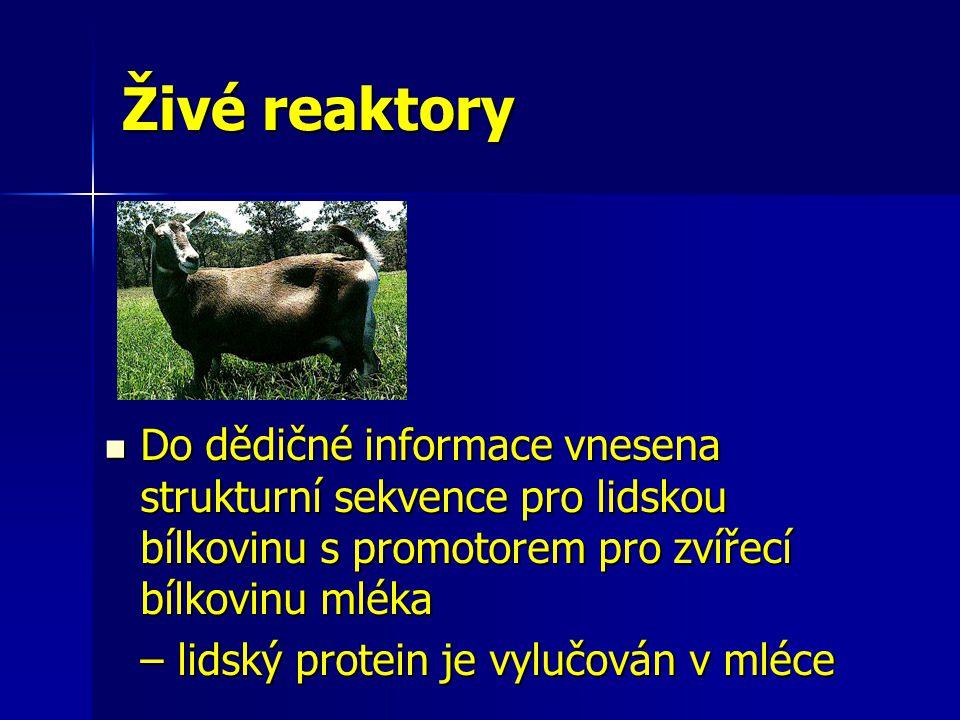 Živé reaktory Do dědičné informace vnesena strukturní sekvence pro lidskou bílkovinu s promotorem pro zvířecí bílkovinu mléka Do dědičné informace vne